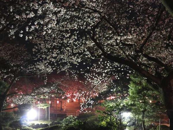芦城公園 (9)