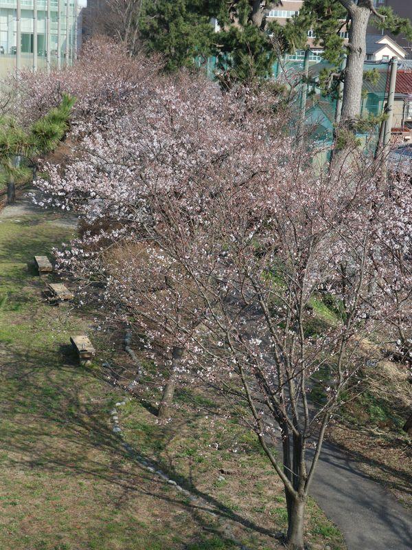 小松城 (13)