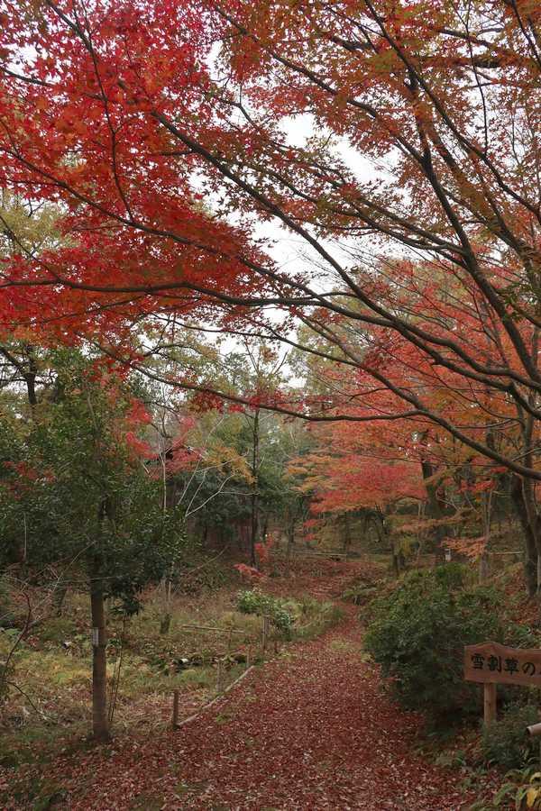 憩いの森 (7)
