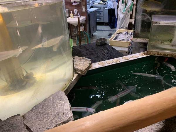 日本大漁物語きじま (11)