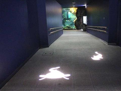 琵琶湖博物館 (32)