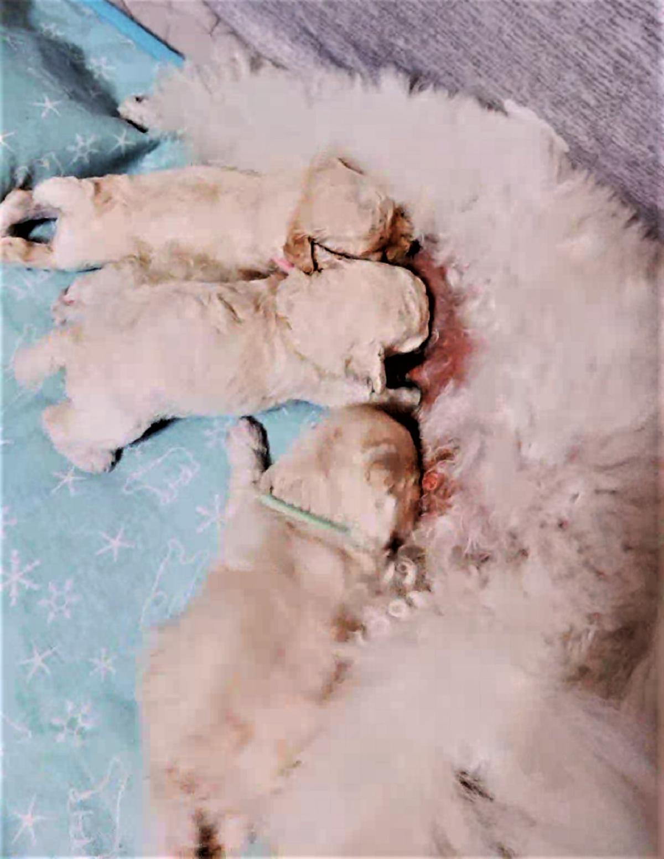 パピー犬6