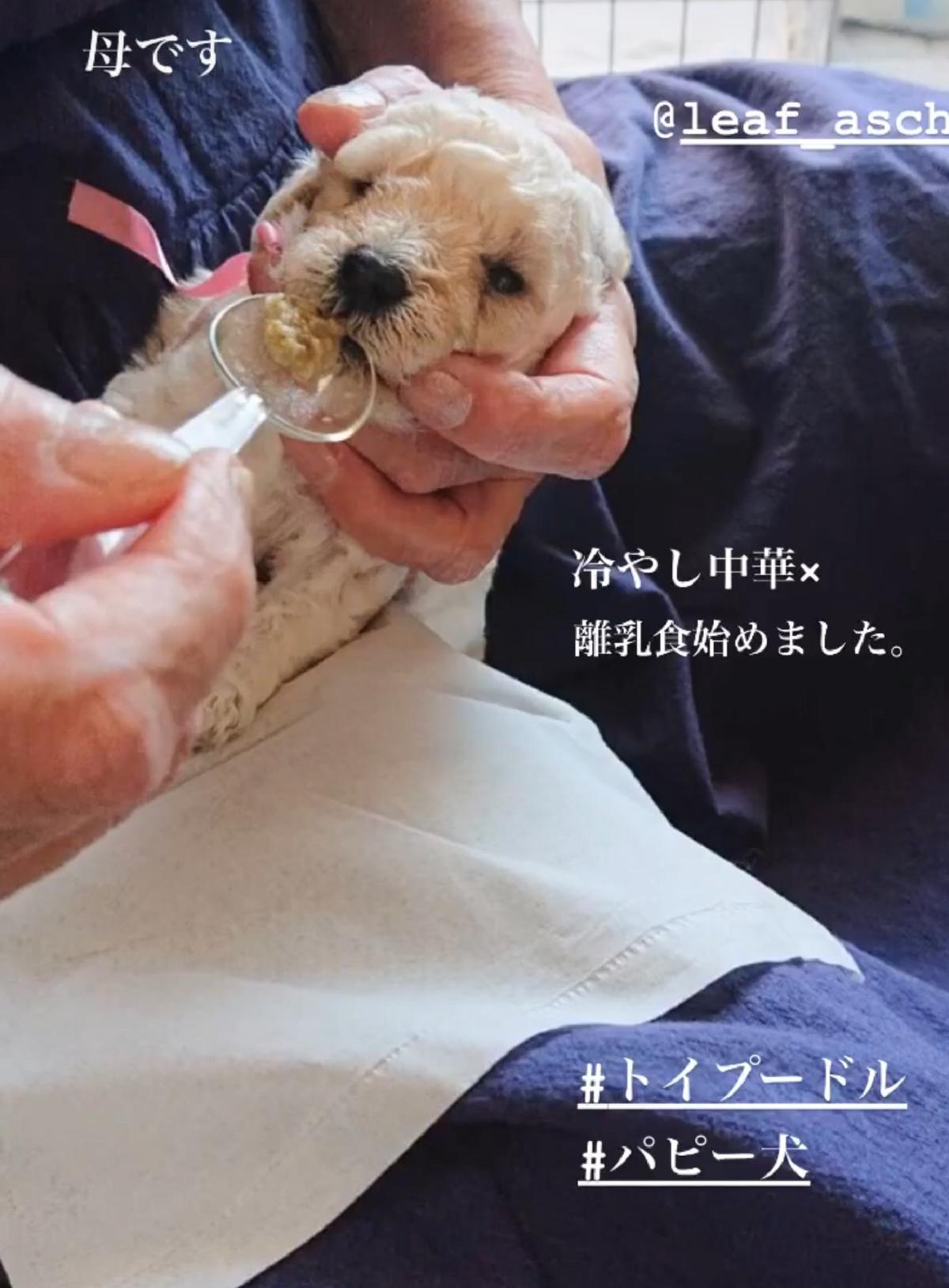 パピー犬成長記録6月25日-2