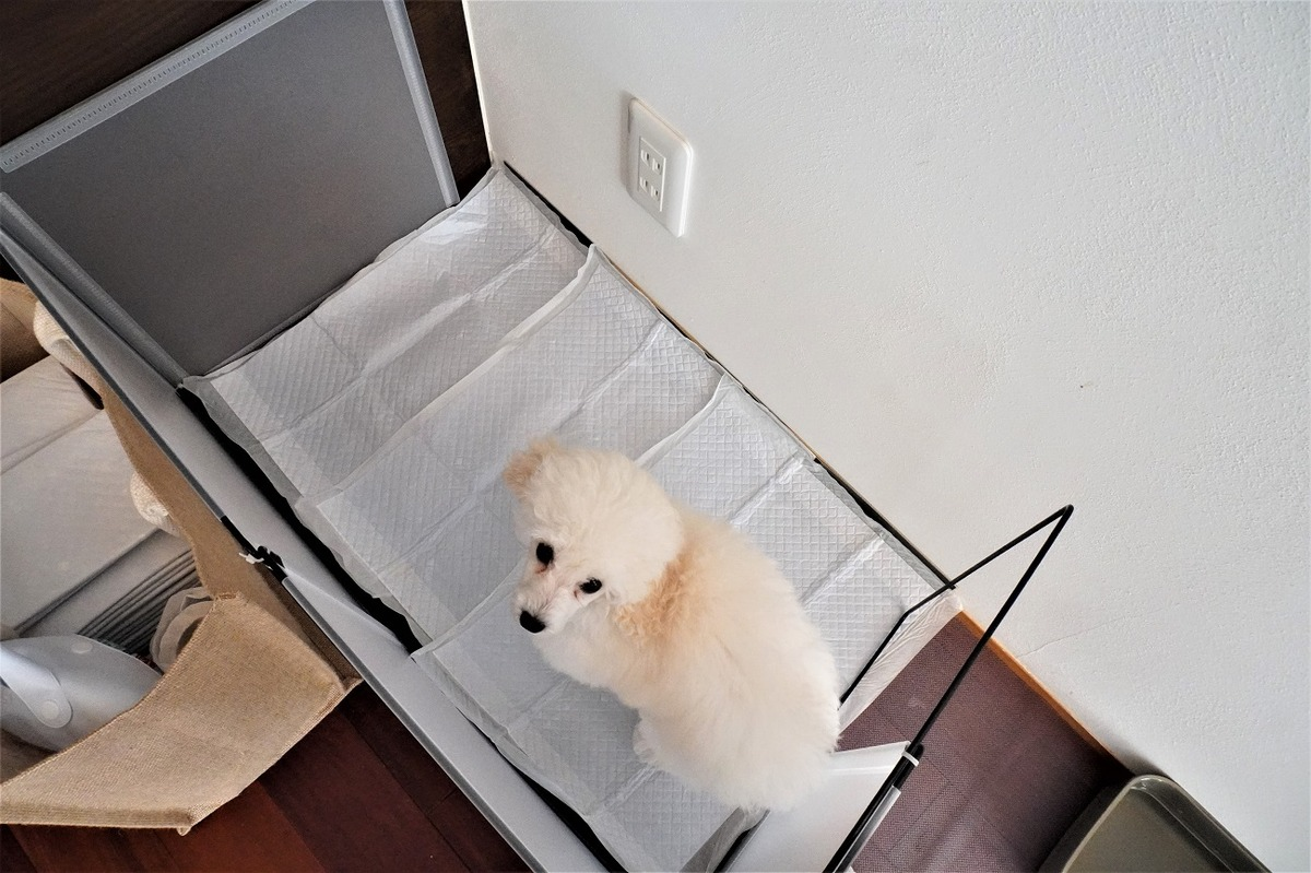 ダイソー 愛犬トイレ9