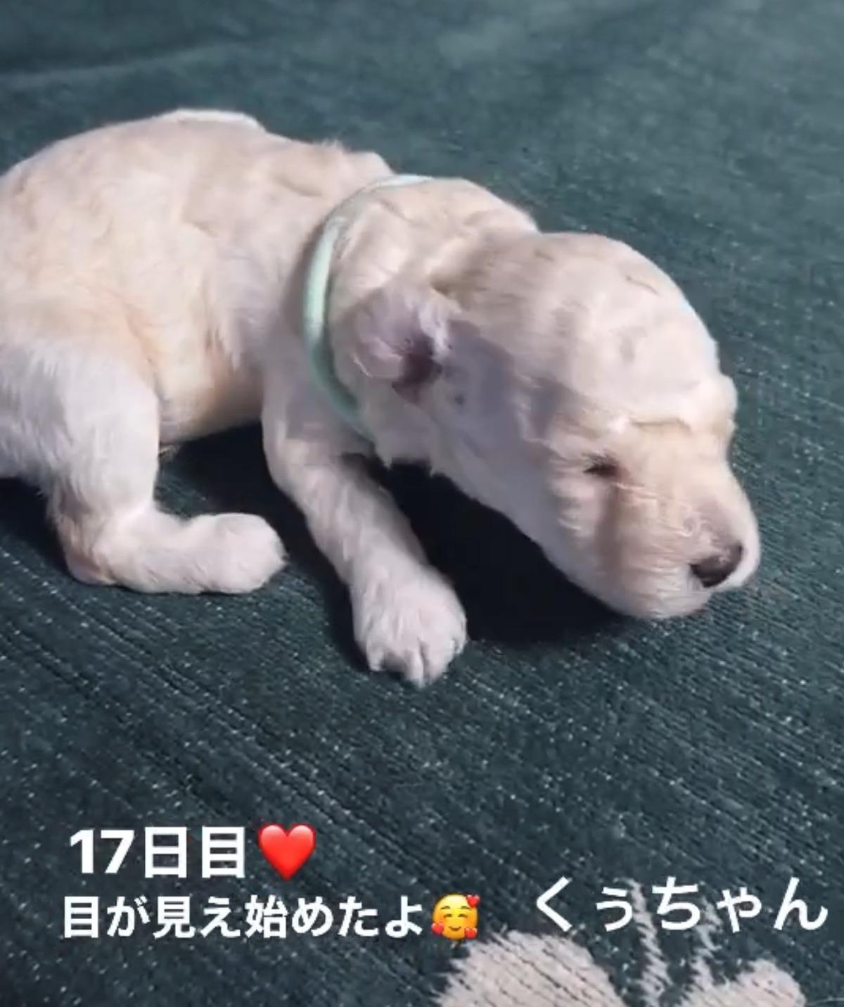 パピー犬2