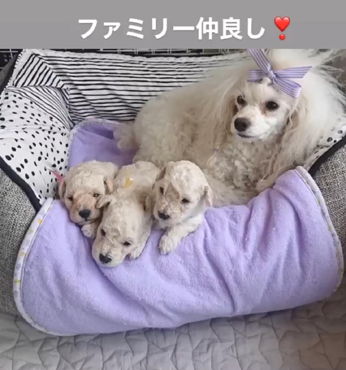 パピー犬成長記録6月24日