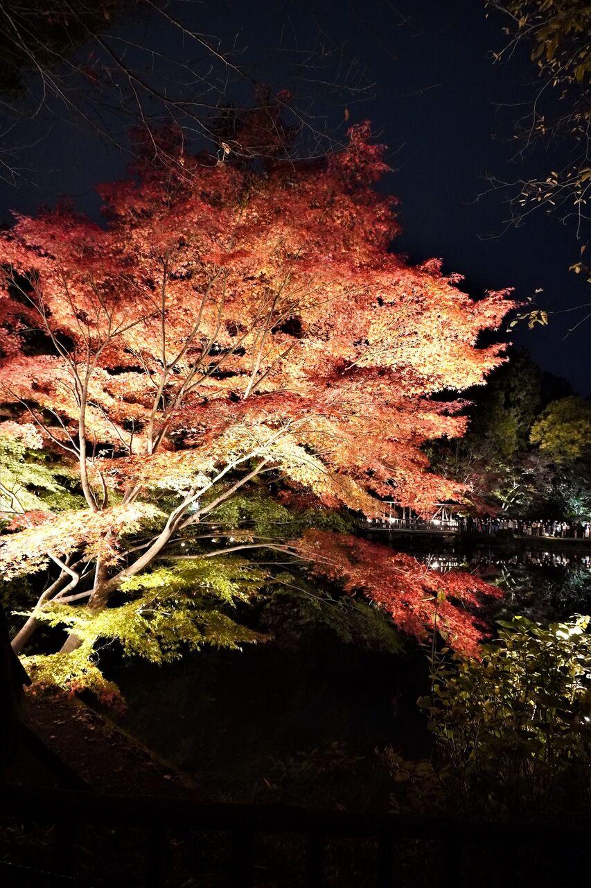 紅葉ライトアップ20191124-7