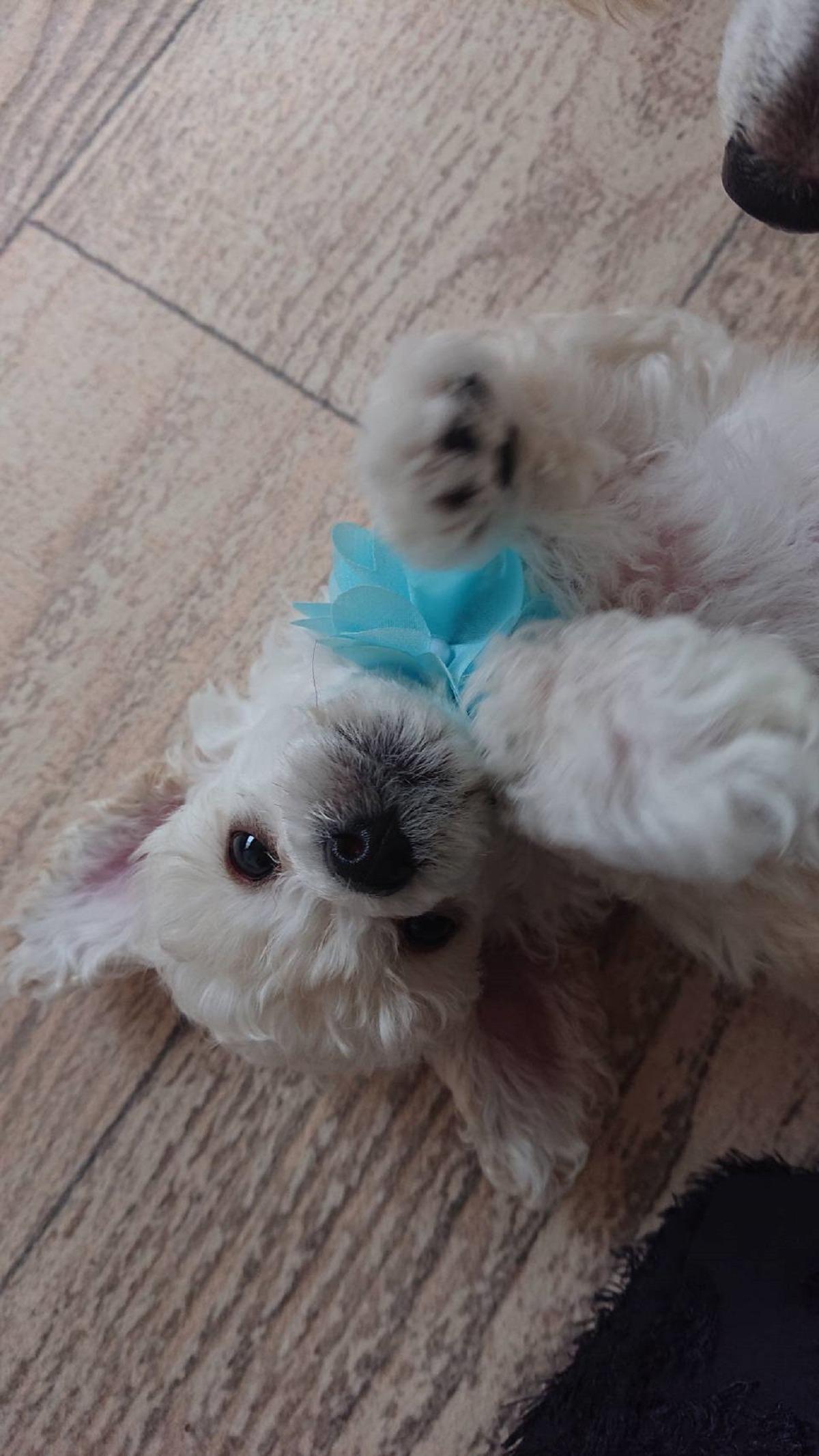 パピー犬1