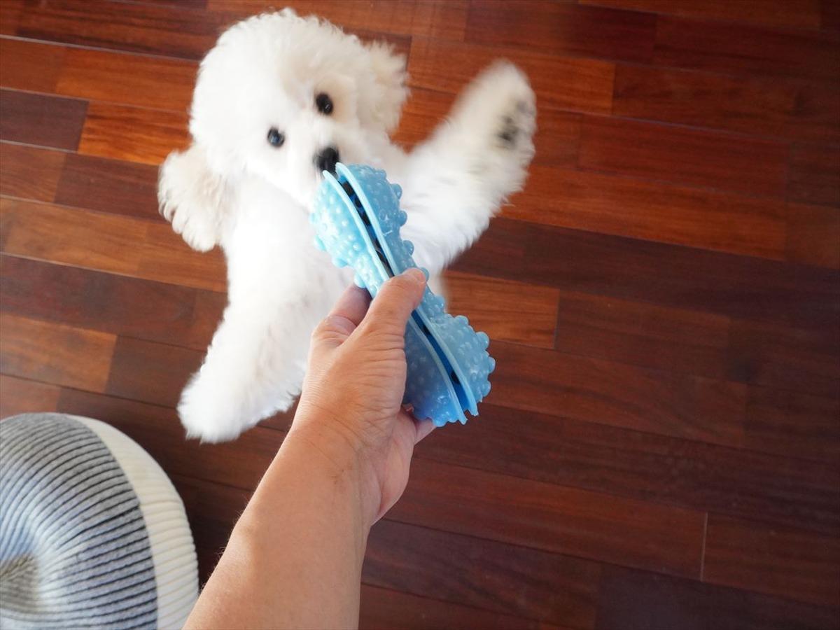 【フライングタイガー】愛犬が大喜びしたかわいいペットトイ♪