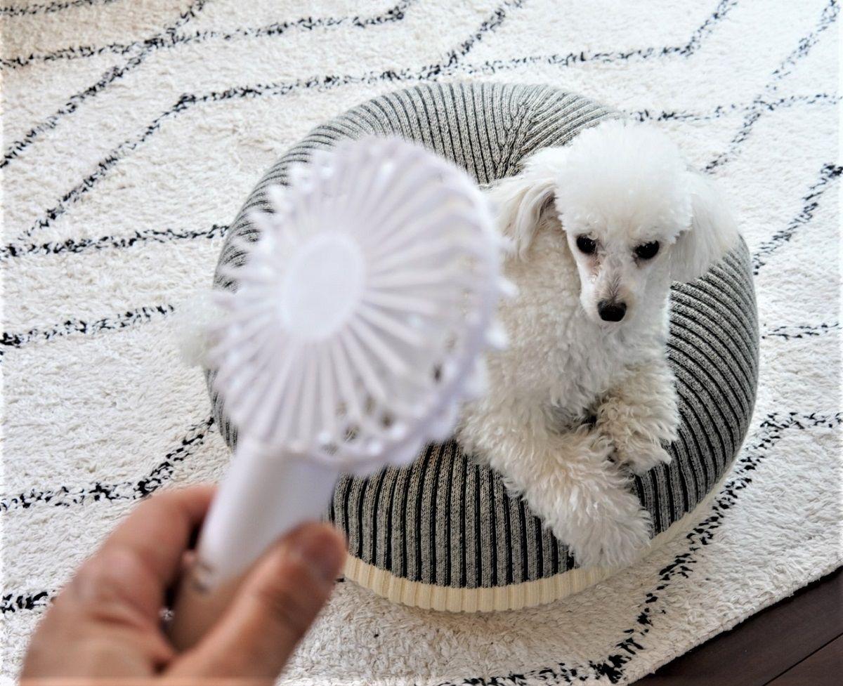 ミルクフェド小型扇風機15