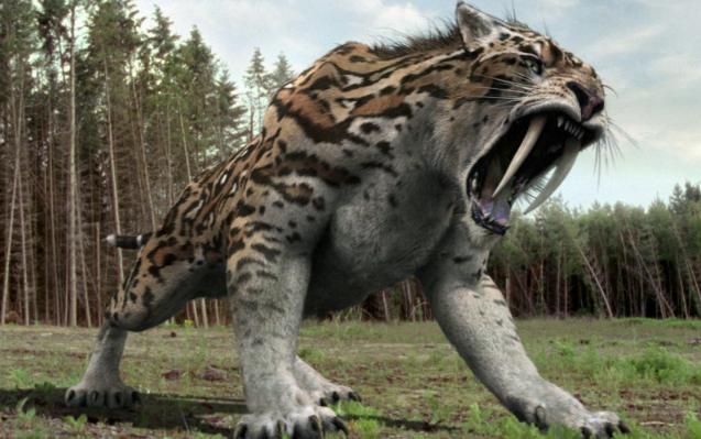 絶滅サーベルタイガーの動物壁紙