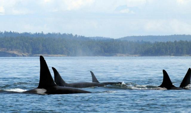 マッコウクジラの画像 p1_11