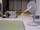 050828-扇風機