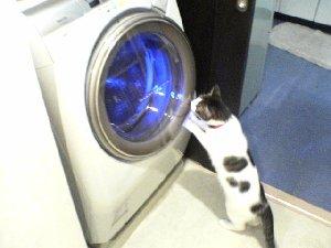051015洗濯機
