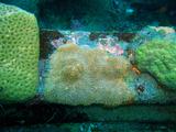 鉄骨の珊瑚