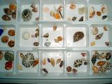 坂田の貝殻
