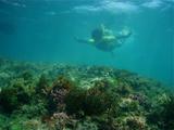 Tさんと珊瑚