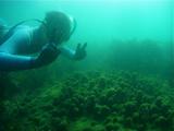 サンゴでピース