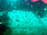 ××魚礁2