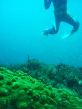 サンゴと足