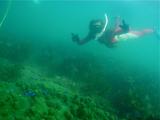 サンゴでピース2