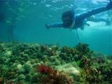 Yさんと珊瑚