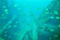 漁礁のかごかき