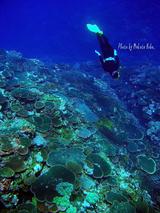 珊瑚の森へ