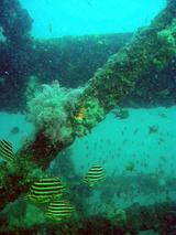 ××魚礁1