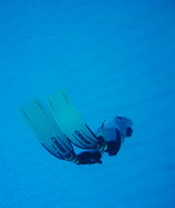 海の底で冬眠kumako