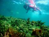 YYさんと珊瑚