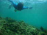 Mさんと珊瑚