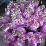和田のお花