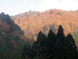 内杉谷林道から見上げる