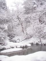 由良川 渕谷出合付近