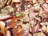 ランの葉とタヌキの糞