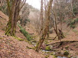 カヅラ谷の上流