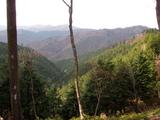 奥ノ谷山分岐付近から中山谷山方面