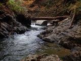 シカメコ上流 流木の橋
