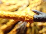 粘菌の拡大