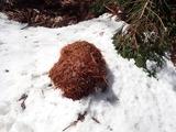 リスのものと思われる巣の材料が落ちていた