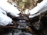 カヅラ谷 倒木で積雪期にはこの先には行けない
