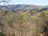 ブナの新緑と百里ケ岳