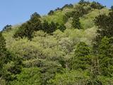 コナラの森はプラチナ色