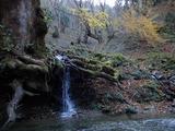 トチノキ谷 トチノキの根元から流れる水が復活した