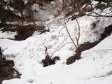 カヅラ谷出合の上流側 雪崩跡(デブリ)
