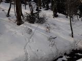 ヤドリギが付いていたので雪の重みで折れたと思われる