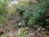 櫃倉ゴルジュの巻き道が倒木で通行不能になっていた