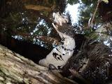 水中のシカの死体とナガレヒキガエルのオタマジャクシ