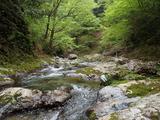 カズラ谷出合の上流